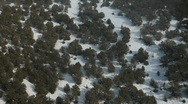 Stock Video Footage of Aerial mountain trees winter P HD 6370
