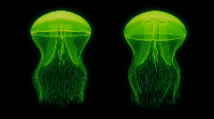 Jellyfish Nightlights Assets Green - stock footage