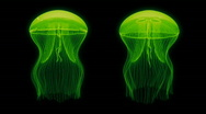 Stock Video Footage of Jellyfish Nightlights Assets Green