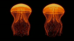 Jellyfish Nightlights Assets Orange Stock Footage
