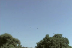 Vultures flying Stock Footage