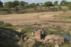 Reetbuck in the Serengeti Stock Footage