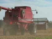 Combine harvesting grain in fall Stock Footage