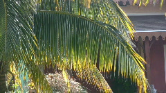 Palm Fronds Stock Footage