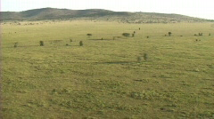 Aerial view of the Serengeti - stock footage