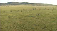 Stock Video Footage of Aerial view of the Serengeti
