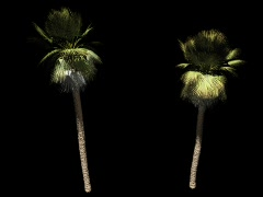Palm trees with alpha map - stock footage