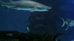 Sharks Swimming 06 - stock footage