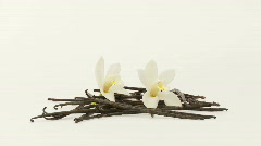 Vanilla herb with flowers Stock Footage