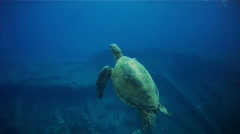 Turtle and diver Stock Footage