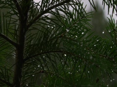 Branches with Water droplets Stock Footage