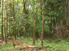 Green Forest pan Stock Footage