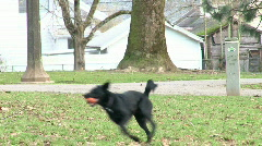 Dog Running To Fetch Stock Footage