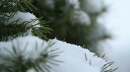 Stock Video Footage of Extreme Close-Up of Snow Fall on a Pine Branch