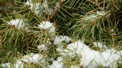 Gentle snowfall on a pine branch Stock Footage