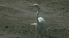 Tropical River Birds - Costa Rica Tarcoles River - 01 Stock Footage