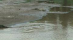 Wild River Crocodiles Costa Rica Tarcoles River 03 Stock Footage