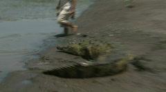 Wild River Crocodiles Costa Rica Tarcoles River 08 Stock Footage