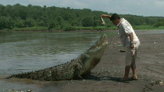 Man feeds HUGE wild crocodile! Costa Rica Tarcoles River 09 Stock Footage