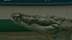 Wild River Crocodiles Costa Rica Tarcoles River 14 Stock Footage
