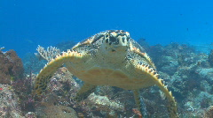 Sea turtle swimming toward camera - stock footage