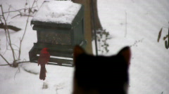 Cat bird watching 03 Stock Footage