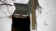 Cat bird watching 05 Stock Footage