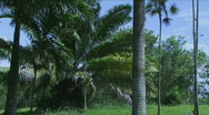 Jungle Palms Time Lapse - Dominican Republic - 01 Stock Footage