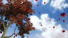 Autumn Leaves Falling 2 Stock Footage