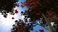 Autumn Leaves Falling 3 Stock Footage