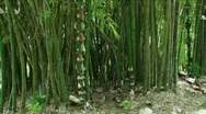Jungle Exteriors / Textures/ Elements - 01 Stock Footage