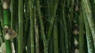 Jungle Exteriors / Textures/ Elements - 10 Stock Footage