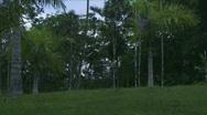 Jungle Exteriors / Textures/ Elements - 11 Stock Footage