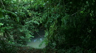Jungle Exteriors / Textures/ Elements - 19 Stock Footage