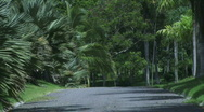 Jungle Roads - 02 Stock Footage