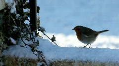 Robin in Snow Stock Footage