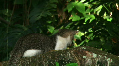 One-Eyed Alley Cat - 01 Stock Footage