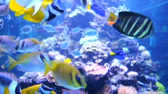 Sealife with lots of different sea fishes Stock Footage