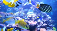 Stock Video Footage of Sealife with lots of different sea fishes