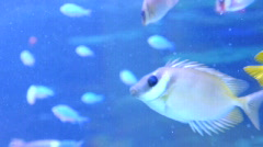 grey fish in the aqarium - stock footage