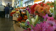 Stock Video Footage of Fresh Flowers