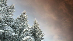 Time-lapse of snowy pine trees in mountain forest Stock Footage