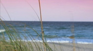 Seagrass beach Stock Footage