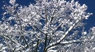 Winter Tree 1427 Stock Footage