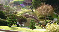 Dramatic Japanese Gardens Footage