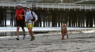 Joggers on Public Beach w/ Dog Stock Footage