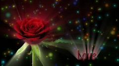 "Red rose ""Valentino"" color meaning ""Love"" 1a alpha matte Stock Footage"