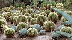 Cactus Gardens Stock Footage