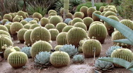 Stock Video Footage of Cactus Gardens