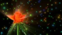 """Montage of opening orange """"Lambada"""" rose 3 alpha matte Stock Footage"""